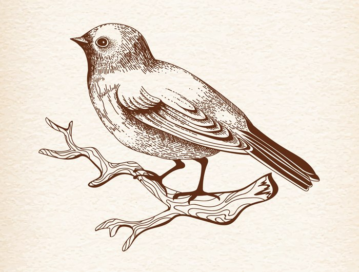 Bird Vector Art Free Vector cdr Download - 3axis co