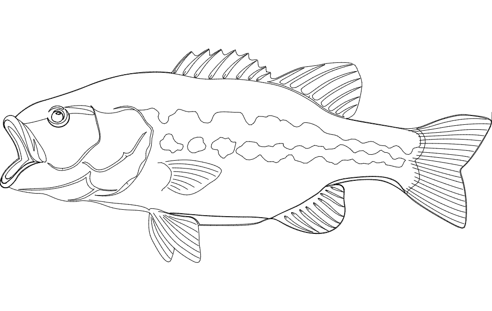 Largemouth Bass Fish Dxf File Free Download 3axis Co