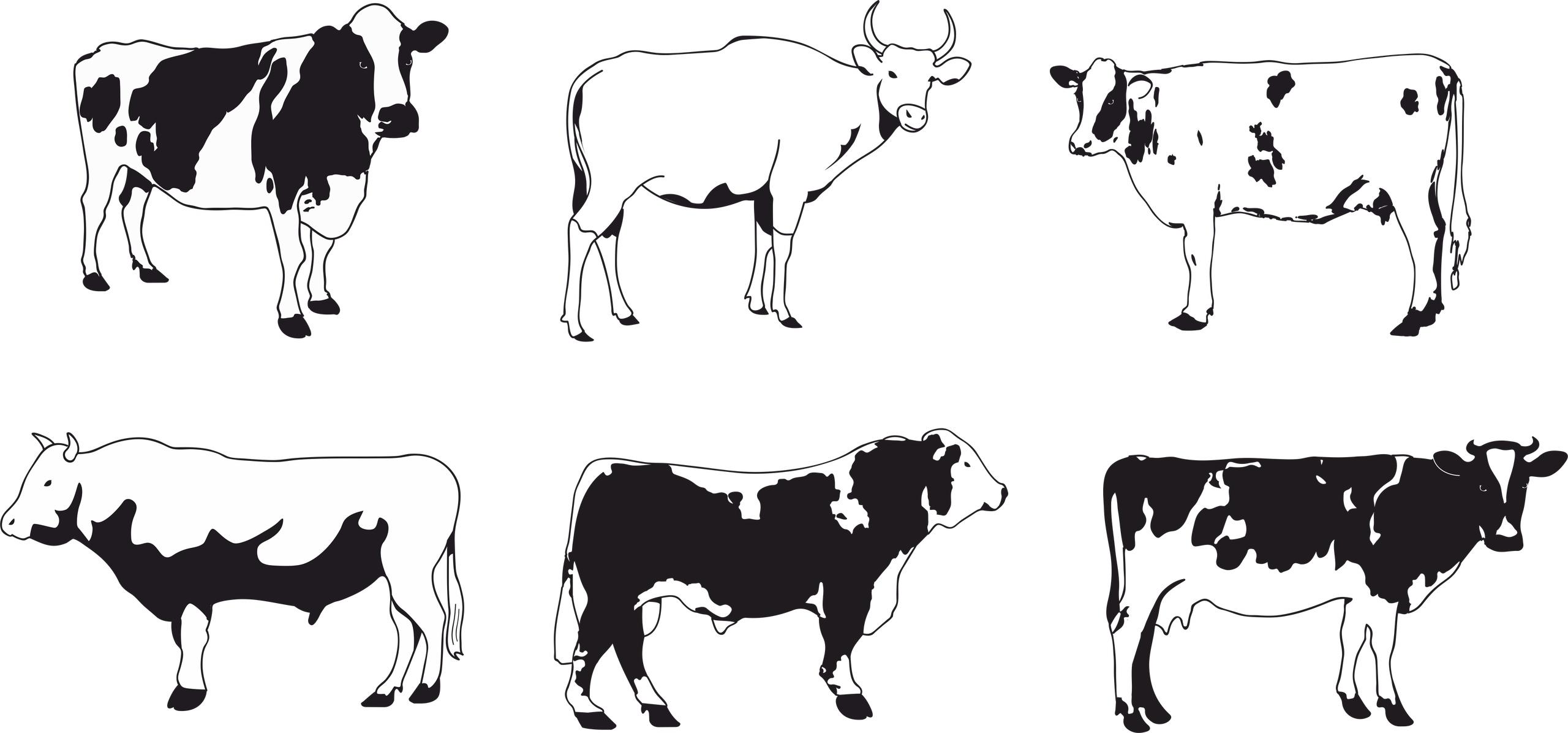 كيفية البدء بمشروع مزرعة ماشية وطرق الربح منة 2020 8