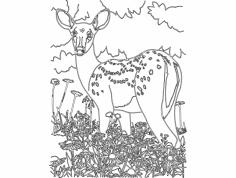 Bambi dxf File