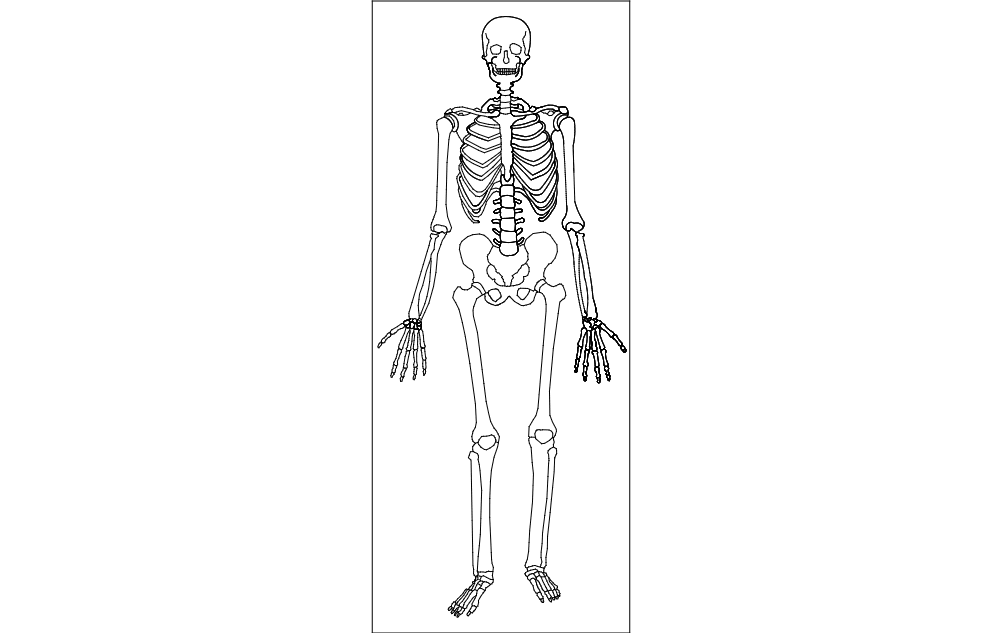 Human Skeleton Dxf File Free Download 3axis