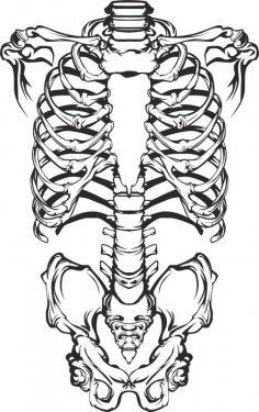 Human Skeleton Vector CDR File